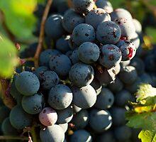 Grape by Filippo Macchi
