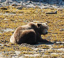Beached Bear by Dannah Johnston