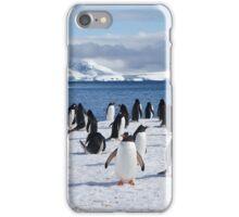 Gentoo penguins (Pygoscelis papua). Antarctica iPhone Case/Skin