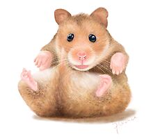 BABY HAMSTER WAITING FOR HUG Photographic Print