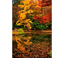 A feast for the senses at Alfred Nicholas Gardens Photographic Print