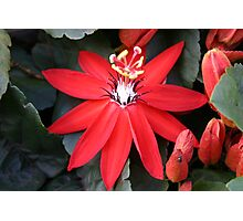Scarlet Passionflower Photographic Print