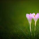 Spring's First Breath by Alyssa Schroeder