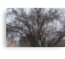 cold mornings Canvas Print