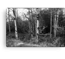 Dorchester Aspen Monochrome Canvas Print