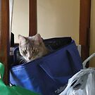 Cat In The Bag by judygal