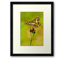 Buds and Butterfly Framed Print