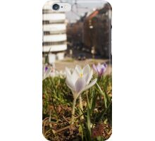 A white crocus meadow overlooking a white house iPhone Case/Skin