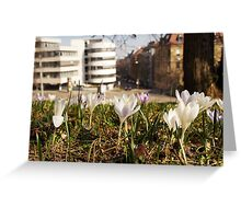 A white crocus meadow overlooking a white house Greeting Card