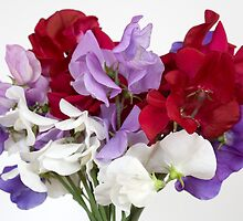Sweet Peas by Brian Haslam