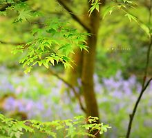 """""""Amidst Bluebell Woods"""" by Richard Couchman"""