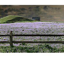 Lavender Dream Photographic Print