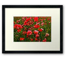 Meadow Flowers Framed Print