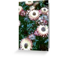 Living Paper Flower Greeting Card