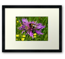 Bumble Bee on a wild Flower Framed Print