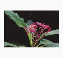 Blooming red plumeria Photographed in a botanic garden Kids Clothes