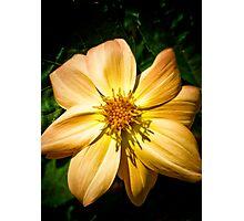 Amber Nectar Photographic Print