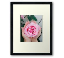 Woman cups a large pink rose in the palms of her hands Framed Print