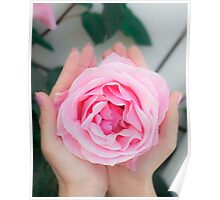 Woman cups a large pink rose in the palms of her hands Poster
