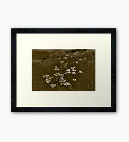 Echo Framed Print