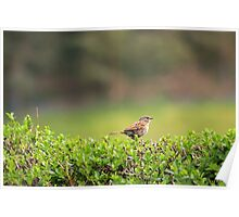 Dunnock in the drizzle Poster