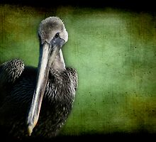 Young Brown Pelican Portrait by Jonicool