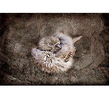 Resting Finch Photographic Print