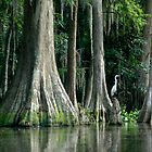 Cypress and Egret-The True Florida by Margaret  Shark