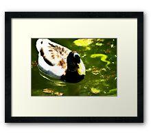 Duck In Nice Green Water Framed Print