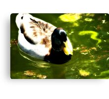 Duck In Nice Green Water Canvas Print