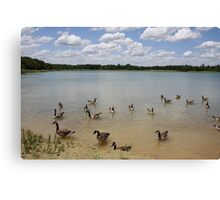Nowbody Here But Us Geese Canvas Print