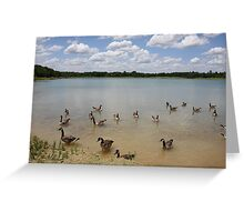 Nowbody Here But Us Geese Greeting Card