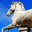 Stone Horse at Piazza del Campidoglio by Renee Hubbard Fine Art Photography