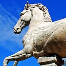 Stone Horse at Piazza del Campidoglio by Renee Hubbard Fine Art Photography