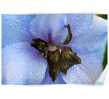 Heart of a Delphinium Poster