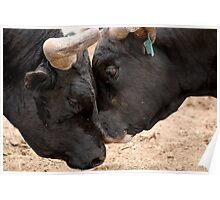 Bulls Love Too! Poster