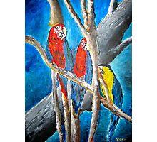 parrot oil tropical art painting print Photographic Print