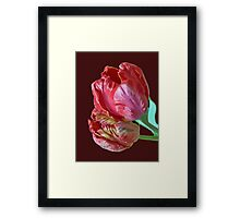 Two Red Tulips Vector Isolated Framed Print