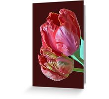 Two Red Tulips Vector Isolated Greeting Card