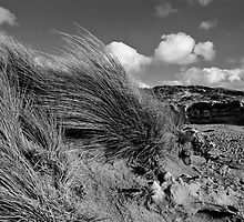 Beachport Shore by Rob Beckett
