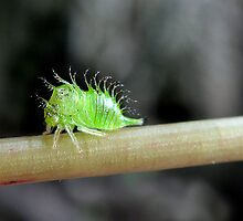 2012 Crawly But Not Creepy by Carla Wick/Jandelle Petters