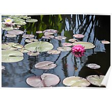 Capistrano Lily Pads Poster