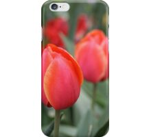 A tulip or two, Floriade,2011,Canberra,Australia. iPhone Case/Skin