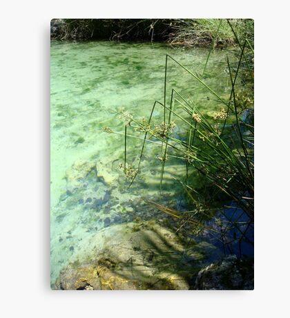 Broken Sedges - Pitt Spring Canvas Print