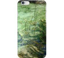 Broken Sedges - Pitt Spring iPhone Case/Skin