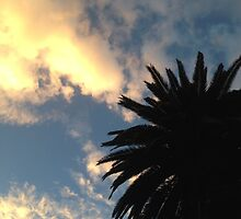 Palm Tree - The Sun Behind The Clouds by moonshinepdise