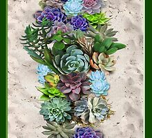 South Africa  Succulents by NadineMay