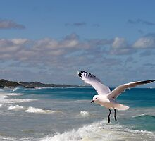 Coming in to land by georgieboy98