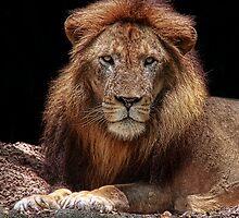The King by Ann  Van Breemen