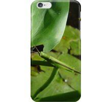 Handsome Meadow Katydid iPhone Case/Skin